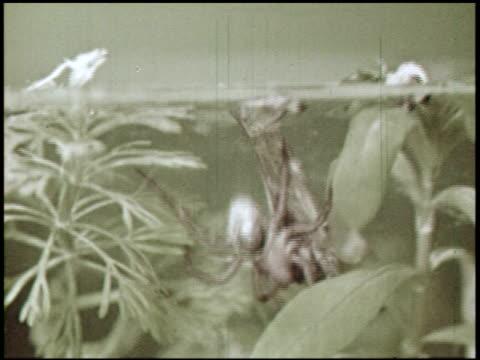 spider engineers - 12 of 15 - andere clips dieser aufnahmen anzeigen 2435 stock-videos und b-roll-filmmaterial