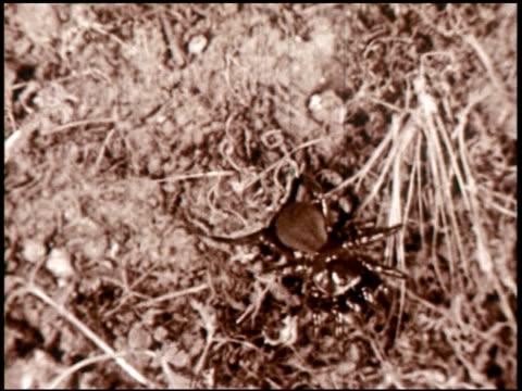 spider engineers - 13 of 15 - andere clips dieser aufnahmen anzeigen 2435 stock-videos und b-roll-filmmaterial