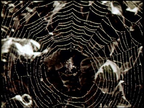 spider engineers - 2 of 15 - andere clips dieser aufnahmen anzeigen 2435 stock-videos und b-roll-filmmaterial