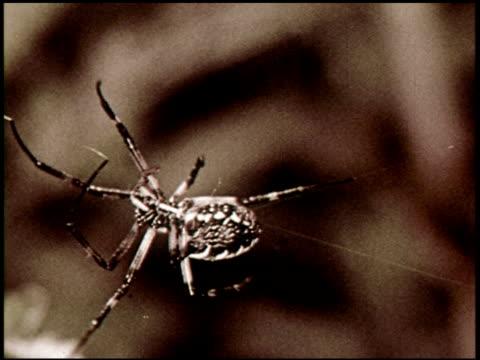 Spider Engineers - 3 of 15