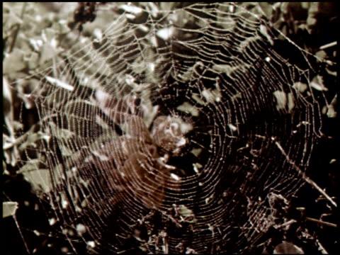 spider engineers - 7 of 15 - andere clips dieser aufnahmen anzeigen 2435 stock-videos und b-roll-filmmaterial