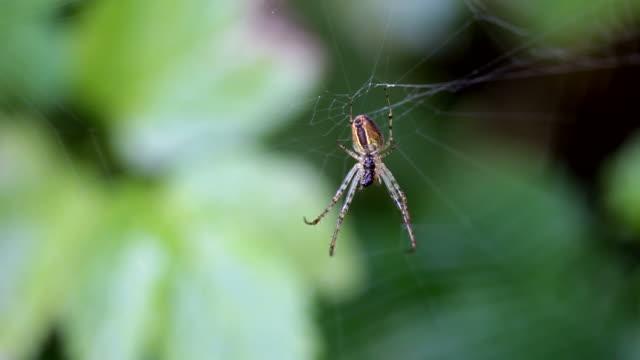 cu spider hanging on spiderweb with dew drops / saarburg, rhineland-palatinate, germany  - saarburg stock-videos und b-roll-filmmaterial