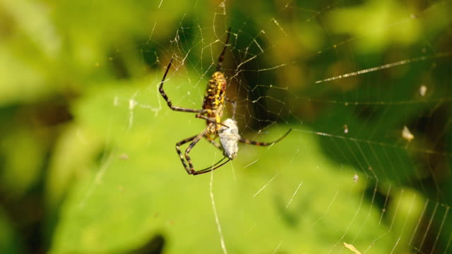 spider hunt insect in silk - catching stock videos and b-roll footage
