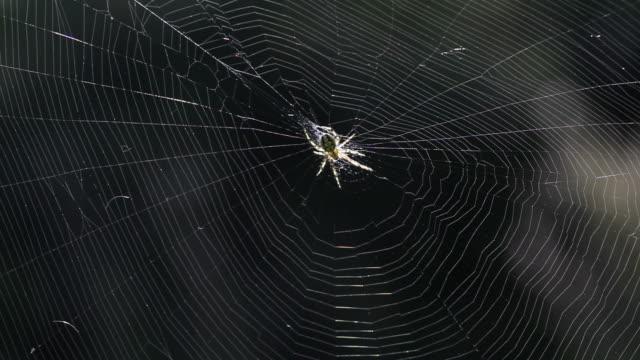 クモで、ウェブ - 捕らわれる点の映像素材/bロール