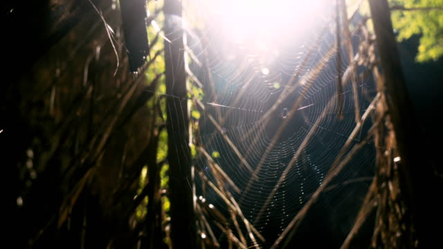 spider in the jungles - arachnophobia stock videos & royalty-free footage