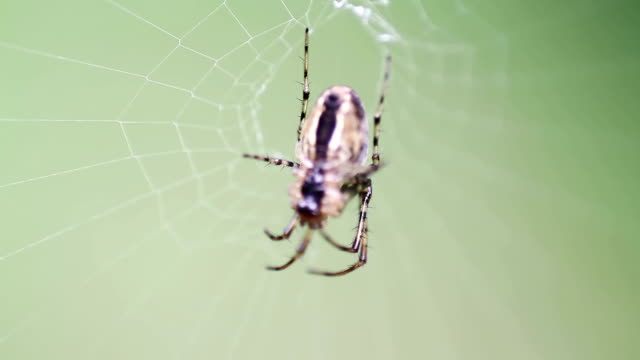 spider in the web - arachnid stock videos and b-roll footage