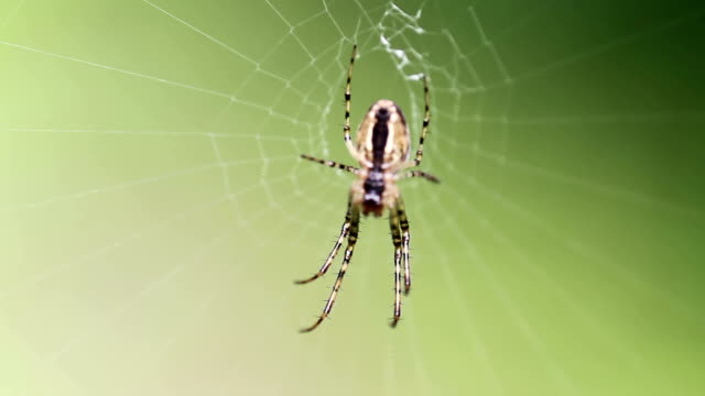 spider in the web - arachnophobia stock videos and b-roll footage
