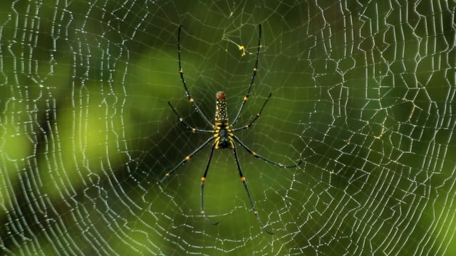 spider making a web - animal markings stock videos & royalty-free footage