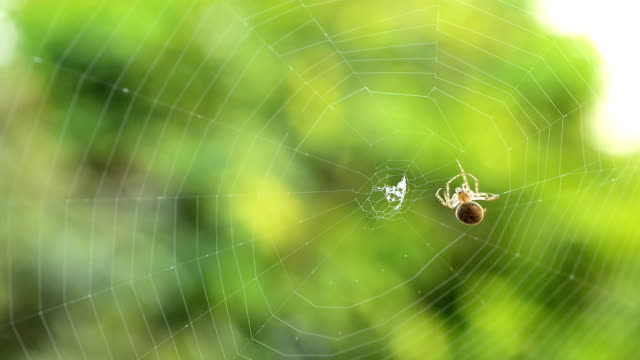 spider making a web - spider web stock videos & royalty-free footage