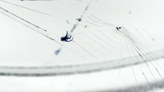 spider making web on white - intricacy stock videos & royalty-free footage