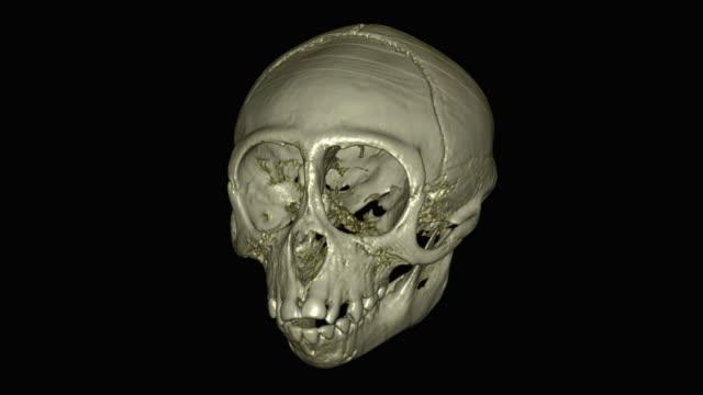 spider monkey skull - skull stock videos & royalty-free footage
