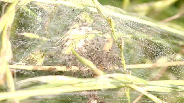 spider nest - extreme close up stock videos & royalty-free footage
