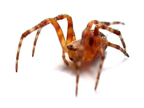 spider ntsc - invertebrate stock videos & royalty-free footage