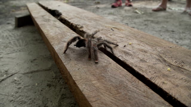 spider on a bench - arachnophobia stock videos & royalty-free footage