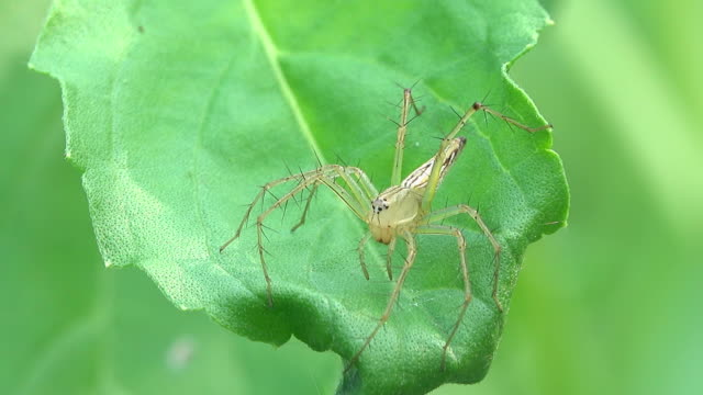 spider on a leaf - animal colour stock videos & royalty-free footage