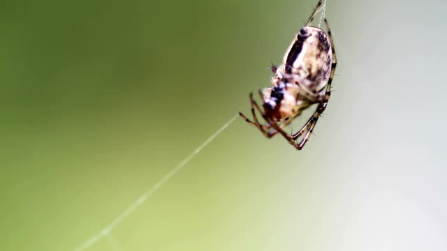 spider on a silk - arachnophobia stock videos and b-roll footage
