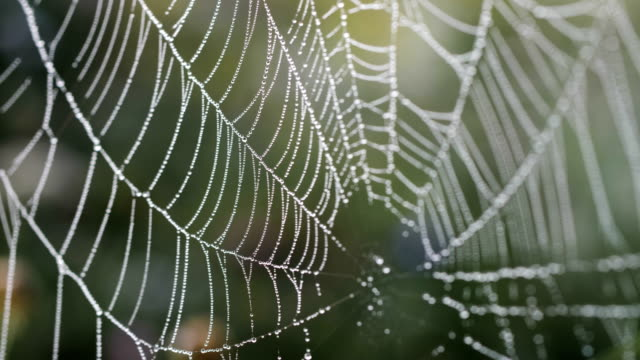 spider on a spider web  in nature with morning dew and sunlight passing through - spider web stock videos & royalty-free footage