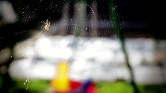vídeos de stock, filmes e b-roll de hd: aranha sobre cobweb e balanços para crianças - pegar