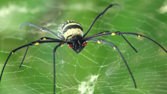 spider on spider web - animal head stock videos & royalty-free footage