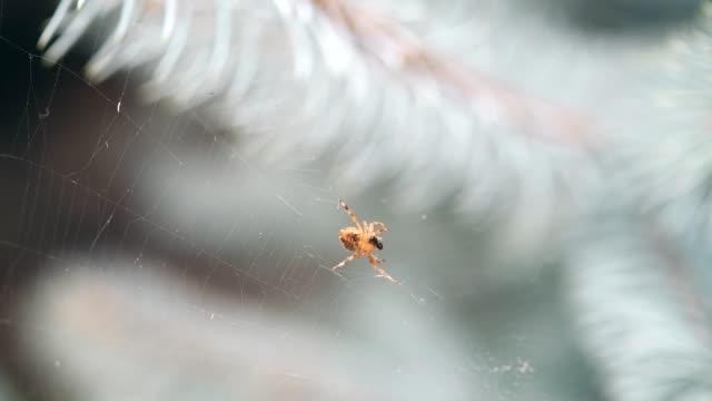 Spinne auf Web und Essen ant