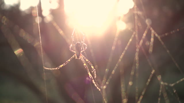 Spider on web at sunset