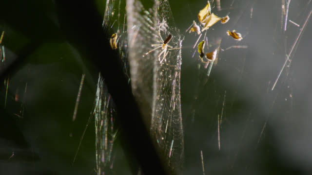 """Spider on web in forest, Calakmul, Mexico"""