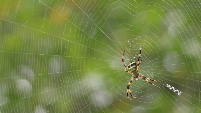 Spider on web in forest