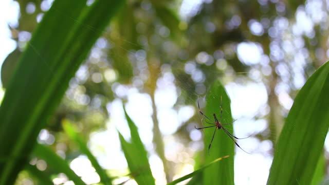 vidéos et rushes de araignée sur le web - araignée
