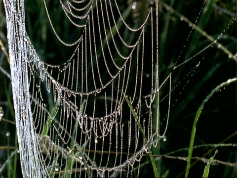 spider orb web covered with dew drops - morning dew stock videos & royalty-free footage