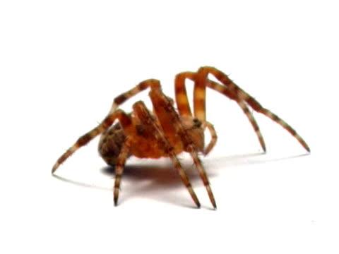 クモ pal - クモ類点の映像素材/bロール