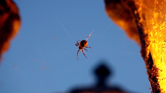 クモにスピン、ウェブ - 網状点の映像素材/bロール