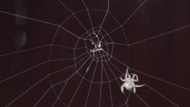 spider spinning a web - spider web stock videos & royalty-free footage