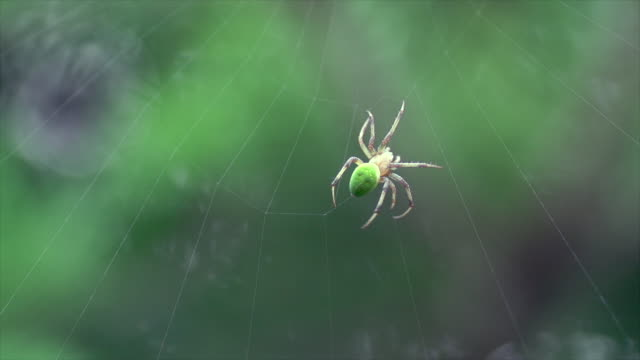 spider spinning its web - spider web stock videos & royalty-free footage