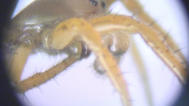 spider under microscope - arachnophobia stock videos & royalty-free footage