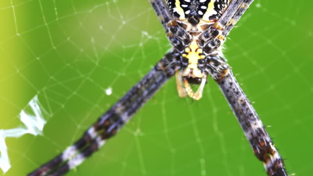 spider - catching stock videos & royalty-free footage