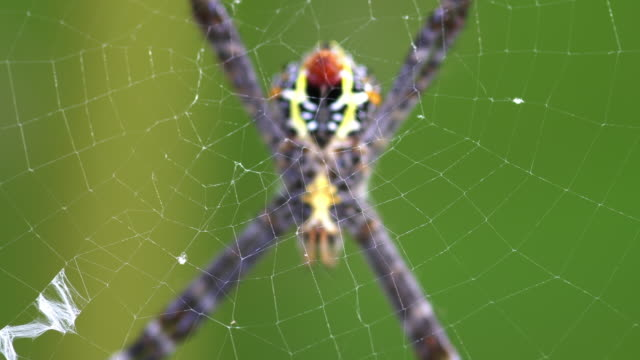 spider - spider stock videos & royalty-free footage