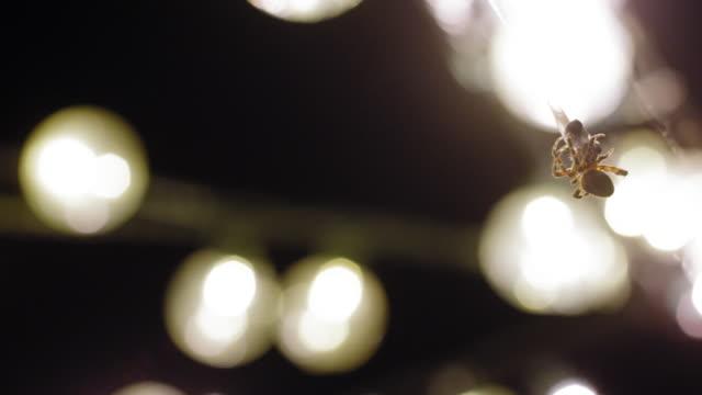クモ - ビジカジ点の映像素材/bロール