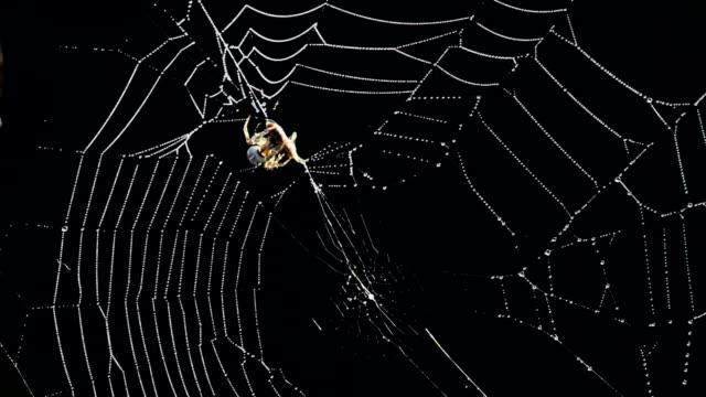 vídeos de stock, filmes e b-roll de aranha - encurralado