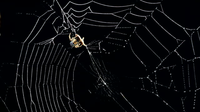 vídeos de stock, filmes e b-roll de aranha - cativeiro