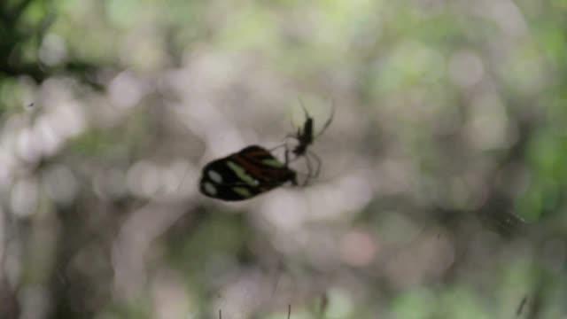 クモ - 捕らわれる点の映像素材/bロール