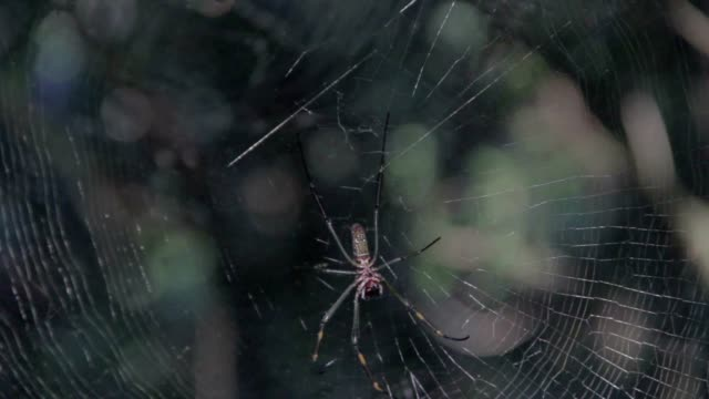 spider - animal colour stock videos & royalty-free footage