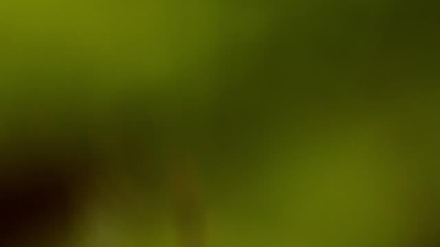 spider - animal markings stock videos & royalty-free footage