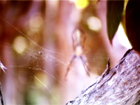 vídeos de stock, filmes e b-roll de aranha  - número 8
