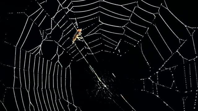 spider - arachnid stock videos and b-roll footage