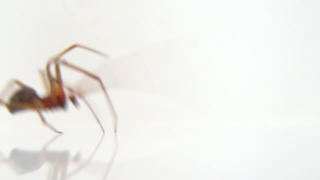 spider walking - isolated on white - white background stock videos & royalty-free footage