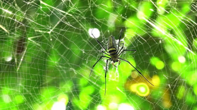 spider walking on spider web - spider stock videos & royalty-free footage