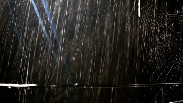 spider web and rain - cable stock videos & royalty-free footage