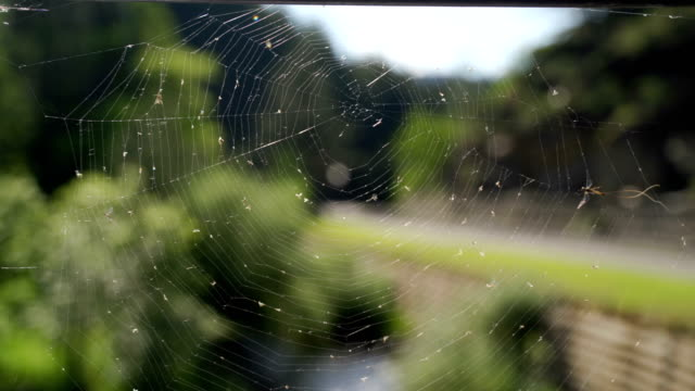 spider web- arachnophobia concept - arachnophobia stock videos & royalty-free footage