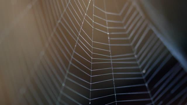 vidéos et rushes de gros plan de la spider web - araignée