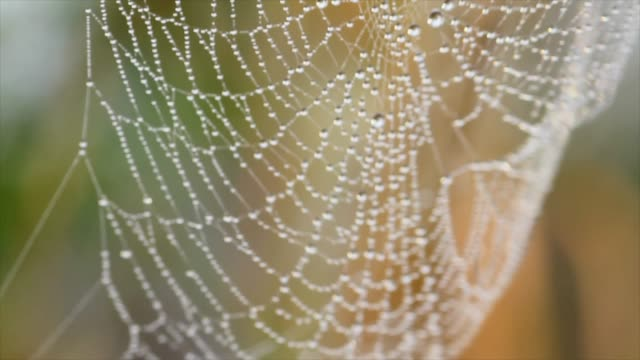 spider web covered in dew - netting stock videos and b-roll footage